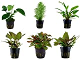 Tropica Mitte Set mit 6 Topf Pflanzen Aquariumpflanzenset Nr.32 Wasserpflanzen Aquarium Aquariumpflanzen