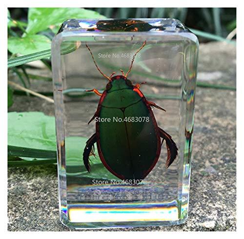 HXF Hxfang®. 1 stück Insektenprobe Stink Bug Larva in klarem Harz pädagogisch erforschen Instrument Instrument Schule lehnen lieferungen 44x29x18mm (Color : Diving Beetle)