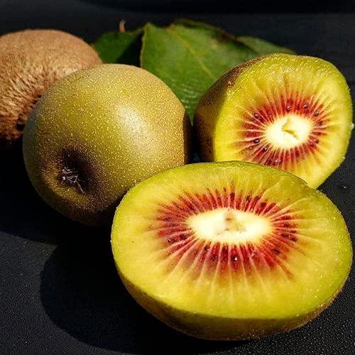 100 Piezas De Semillas De Kiwi Para Jardinería Plantación De Frutas Flores Fragantes De Color Amarillo Claro Jardín Decorativo Patio Invernadero Variedad De Reliquia