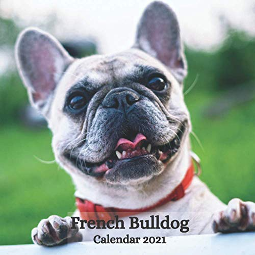 French Bulldog Calendar 2021: January 2021 - December 2021 Square Photo Book Monthly Planner Calendar Gift For French Bulldog Lover | Frenchie Mom or ... Santa Christmas Stocking Filler Present