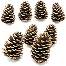 Pine Cones (Real Pine Cones) - 8 Pine Cones - Perfect for Crafting - Decorative Vase Fillers - About 2.75-3.5 Inches Tall