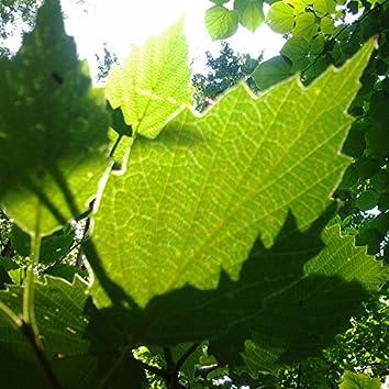 Three Leaves (Instrumentals)