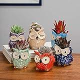 Yucong Mini Macetas Búho Ceramica Macetas para Cactus Set Macetas Suculentas con Desagüé Decoración del Hogar para Interiores y Exteriores Ideal para Oficina Decoracion 6 Pack (Color)