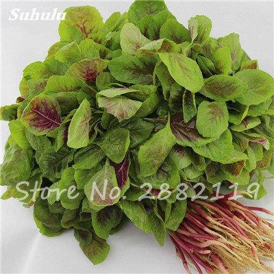 Herb Amaranthus Tricolor Seeds 50 Pcs graminée Semente non Ogm végétale comestible Bonsai Plante en pot sain sucré 16