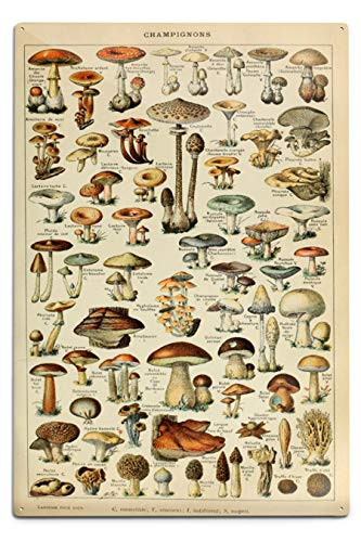 Lantern Press Mushrooms - C - Vintage Bookplate - Adolphe Millot Artwork (12x18 Aluminum Wall Sign, Wall Decor Ready to Hang)