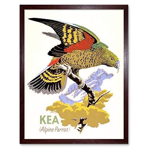 Wee Blauwe Coo Schilderij Illustratie Kea Papegaai Zeeland Vogel Ornithologie Art Print Ingelijste Poster Muurdecoratie 12X16 Inch