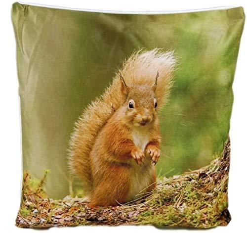 Markenlos Kissenhülle 40x40 cm Dekokissen Kissenbezug Fotokissen Kissen Hüllen Bezug Bezüge (Eichhörnchen auf Waldboden)