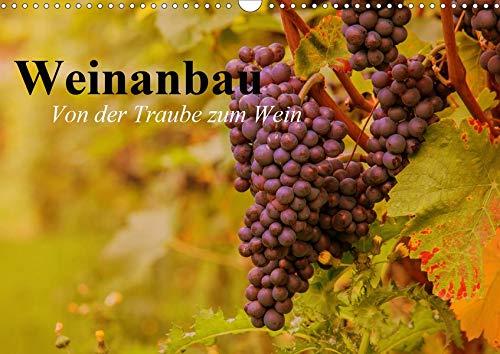 Weinanbau. Von der Traube zum Wein (Wandkalender 2020 DIN A3 quer): Schöne Impressionen vom interessanten Weinbau (Geburtstagskalender, 14 Seiten ) (CALVENDO Natur)