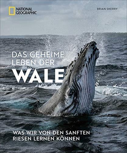 Das geheime Leben der Wale: Was wir von den sanften Riesen lernen können