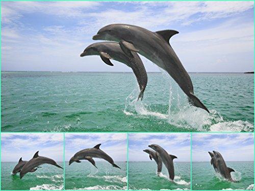 DELFIN-SPRUNG Lentikular-Postkarte mit Wackelbild/Wechselbild von springenden Delfinen von Edition Colibri