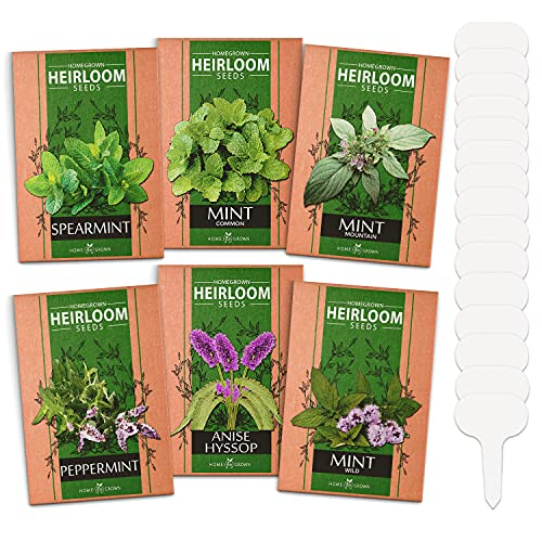 6 Mint Seeds Garden Pack - Mountain Mint, Spearmint, Peppermint, Wild Mint, Anise Hyssop, and Common Mint | Quality Herb Seed Variety for Planting Indoor or Outdoor | Make Your Own Herbal Mint Tea