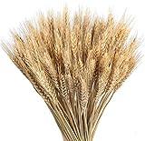 Ruiuzi Getrocknete Weizen Natürliche Trocken Weizen Deko Weizenstrauß Weizen Getrocknete Blumen für Hochzeit Mittelstücke Zuhause Balkon Party Tisch Vase Deko 40cm (Brown)