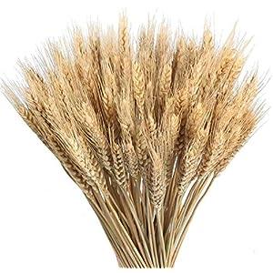 Ruiuzi Decoración de Trigo seco Natural Ramo de Trigo Flores secas de Trigo para centros de Mesa de Boda en casa Balcón…