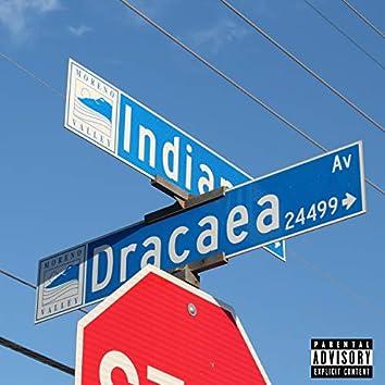 Dracea Ave