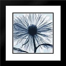Chrysanthemum Blues 28x28 Black Modern Frame and Double Matted Art Print by Koetsier, Albert
