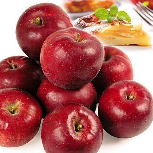 国華園 りんご 山形産 紅玉 10kg ご家庭用 林檎