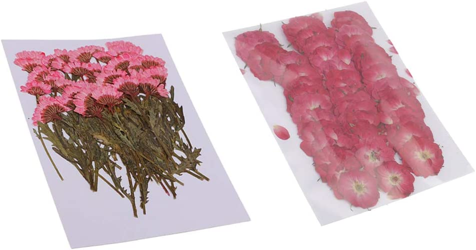 harayaa 100x Naturally Pressed Dried Patterns for 2 Sacramento Tampa Mall Mall Flowers with