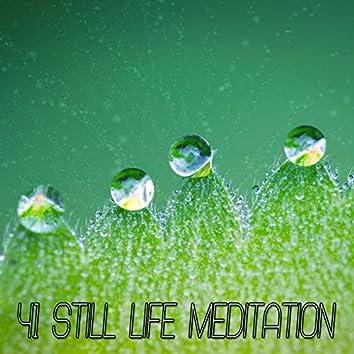 41 Still Life Meditation