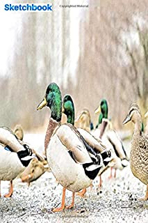 """Sketchbook: team of duck in the forest: 6"""" x 9"""", 103 pages, For everyone: man, woman, children, teenagers and entrepreneurs"""