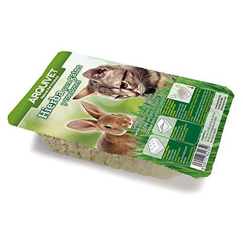 Arquivet Hierba para Gatos y roedores - Semillas para Hierba gatera - Planta para Gatos - Pasto para Gatos - Hierba gatuna - Hierba Comestible para Gatos - 100 g