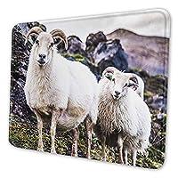 マウスパッド 面白いアイスランド羊, 疲労低減マウスパッド 耐久性が良い 滑り止めゴム底 滑りやすい表面 マウス用パット