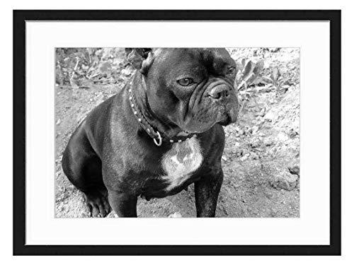 Wood Framed Canvas Artwork Home Decore Wall Art (Black White 20x14 inch) - French Bulldog Dog Doggy Adorable Cute Animal