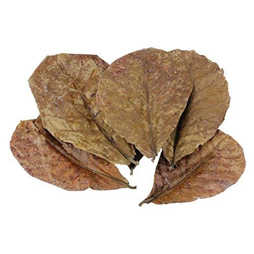 POFET 10 Stück Catappa indische Mandelblätter Ketapang Blatt Garnelen Betta Fisch Aquarium Pflege Niedrigerer pH-Wert für Aquarium Aquarium Verwendung