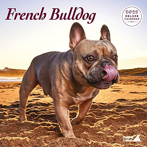 French Bulldog 2022 Calendar: Deluxe Dog Calendar - Wire Bound Wall Calendar 2022-2023, (12' x 12') 12 Months - Dog Owner Gift - Dog Lover Gift