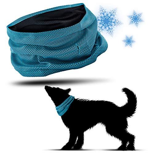 PamperPets Kühlhalsband für Hunde, Größe L, 55cm Halsumfang