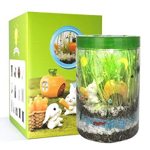 Light-up Terrarium Kit for Kids with LED Light on Lid- STEM Educational DIY Science Project - Create...