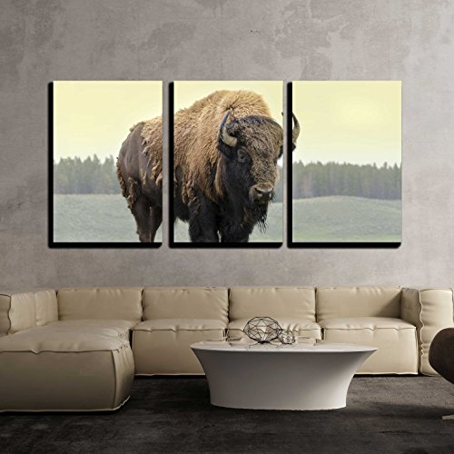wall26 - 3 Piece Canvas Wall Art - Bison in Grasslands of Yellowstone National Park in Wyoming - Modern Home Art Stretched and Framed Ready to Hang - 16