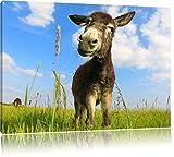 Pixxprint Esel in einem Feld in sonnigen Tag, Format: 60x40