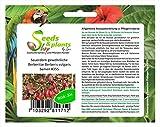 Stk - 20x Sauerdorn Gewöhnliche Berberitze Berberis vulgaris Samen Strauch #355 - Seeds Plants Shop Samenbank Pfullingen Patrik Ipsa