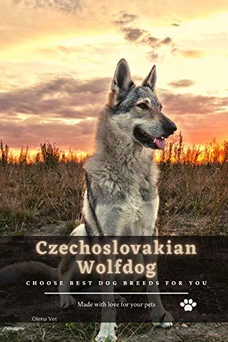 Czechoslovakian Wolfdog: Choose best dog breeds for you