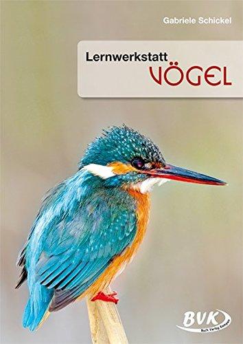 Lernwerkstatt Vögel