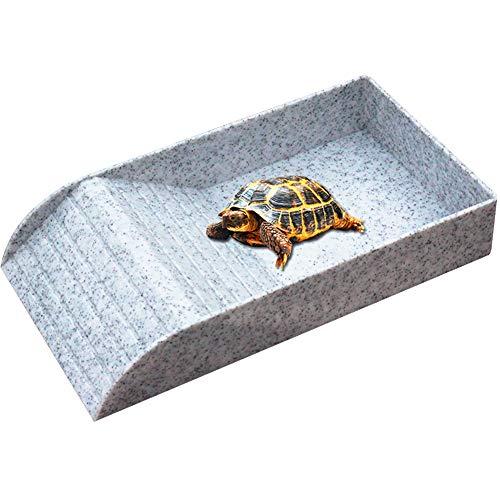Asian Box Turtle Food