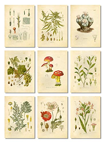Ink Inc. Psychoactive Hallucinogenic Plants Botanical Drawings Vintage Art Prints, Set of 9, 5x7in, Unframed, Cannabis Coca Opium Poppy Tobacco Wormwood Grapes LSD Mushrooms Peyote