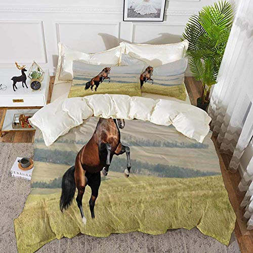 Literie - Housse de couette, Chevaux, Bay Akhal Teke Horse Stallion Eleving on the Field Noble Mammal Outdoors Pastora, Hypoallergenic Microfibre Housse de couette en microfibre avec 2 taies d'oreille