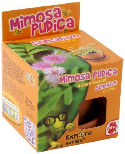 Radis et Capucine Graine de Mimosa Pudica en Pot de Culture pour Enfant Multicolore 5 x 5 x 5 cm