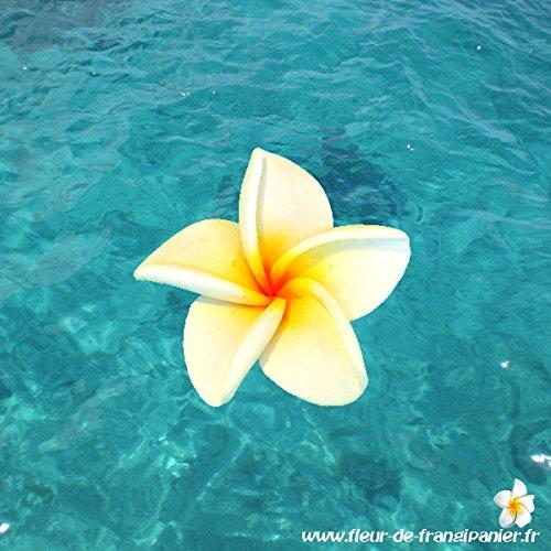 Fleur de frangipanier de décoration (4 cm, Blanc)