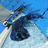 Mermaid Bikini Conjunto con Cola De Sirena para Niños/Adultos/Hombres/Mujeres/Piscinas/Fotos/ExterioresNadar Cola De Sirena para Nadar(Color:Multicolor 1)