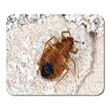 Rae Esthe Tappetini per Mouse Agricoltura Bug Cimex lectularius Insetti parassiti del Tappetino per Mouse cimicid per Notebook, Computer Desktop tappetini per Ufficio