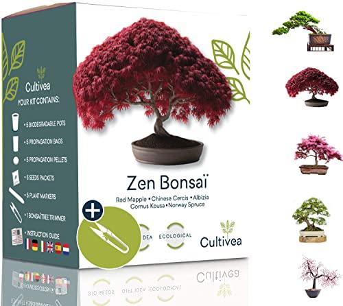 Cultivea -   Mini - 5 Bonsai