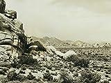 S3 E2: Desert Fantasy