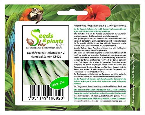 Stk - 25x LauchPorree Herbstriesen 2 Hannibal - Samen Gemüse Lauch Garten KS421 - Seeds Plants Shop Samenbank Pfullingen Patrik Ipsa