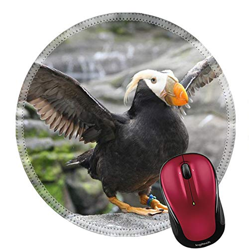 Rundes Mauspad Naturkautschuk Mousepad Tufted Puffin Flapping Wings Lunda Cirrhata Aquarium Newport Oregon Küste 20Cm
