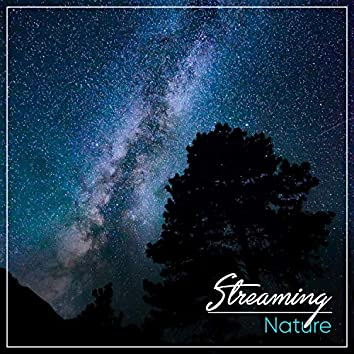 Streaming Nature, Vol. 7
