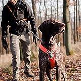 Line Harness von Nonstop, Brustgeschirr, Führgeschirr für Hunde, Größenverstellbar (4, Orange)