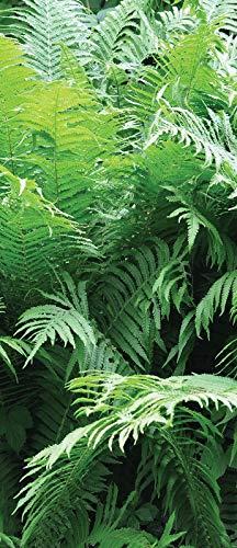 DekoShop Fototapete Tür Vlies - Tapete Natur, Wald, Blumen Wandtapete Grüne Farne AMD10111VET Vet (211 cm. x 91cm.)