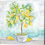 Country Lemon Tree by Cynthia Coulter Canvas Art Wall Picture, Gallery Wrap, 12 x 12 inches